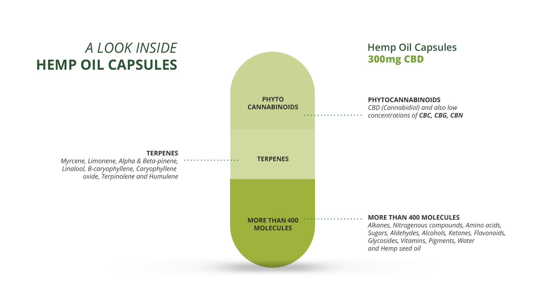 infographic cbd capsules