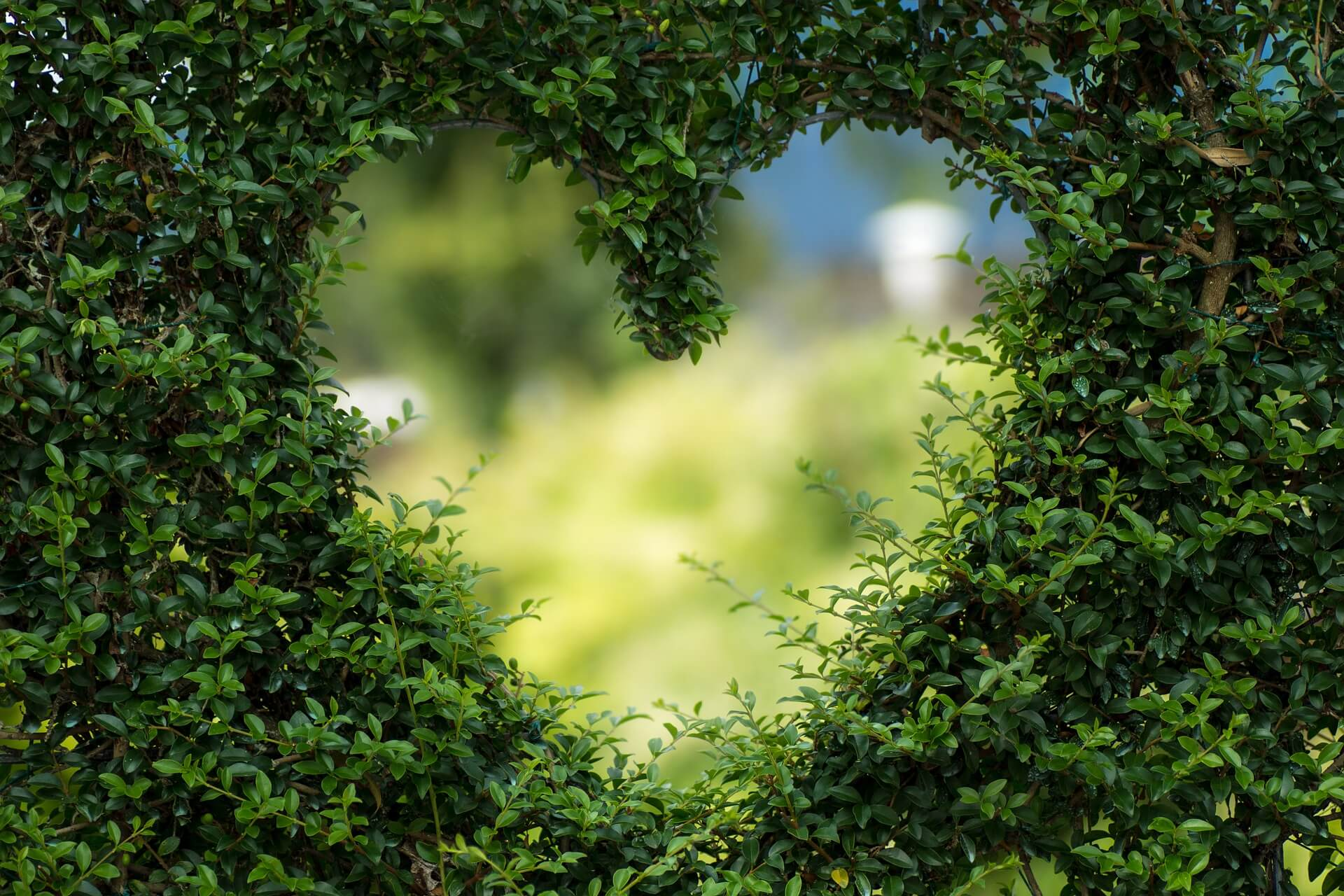 heart in bush