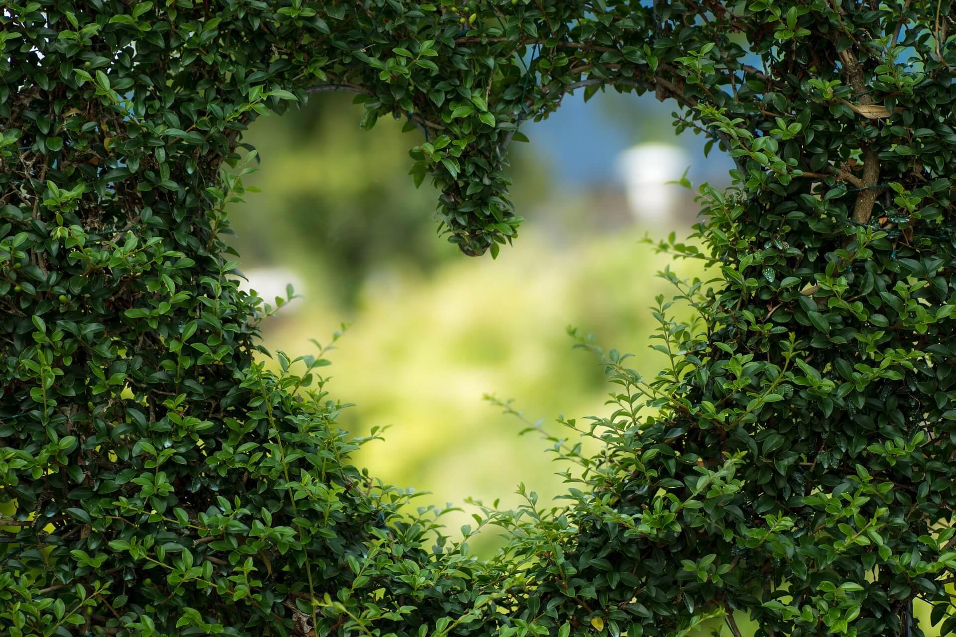heart in bush