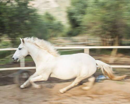 cbd-and-horses