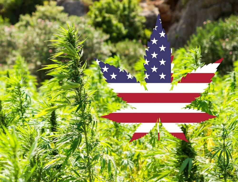 cbd-cannabis-legal-us