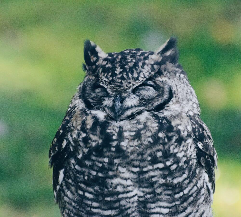 sleeping-night-owl