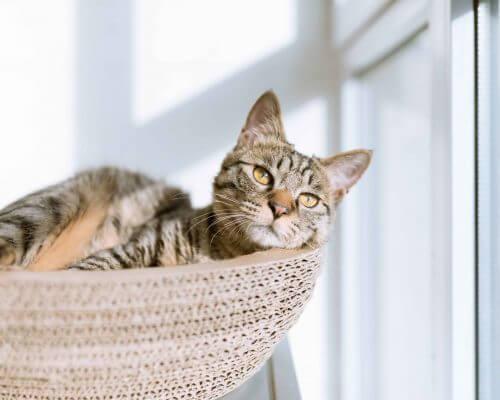 peaceful cat in a basket