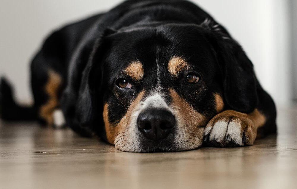 CBD for Dog Epilepsy