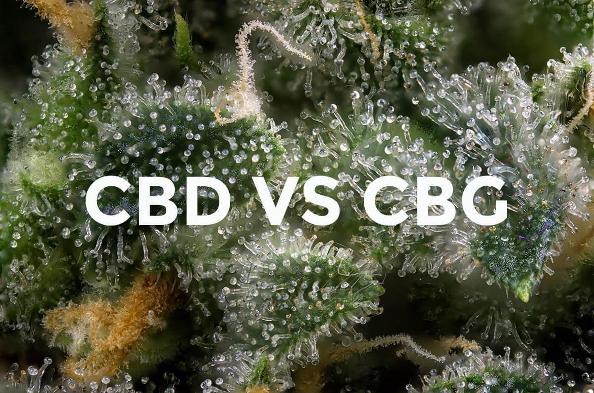 CBD vs CBG