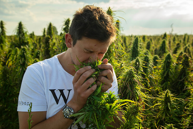 the benefits of terpenes