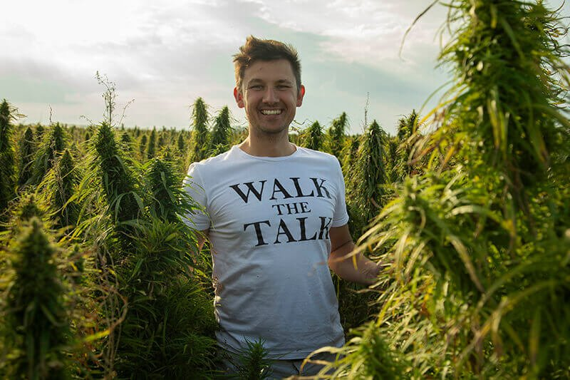 how to harvest hemp