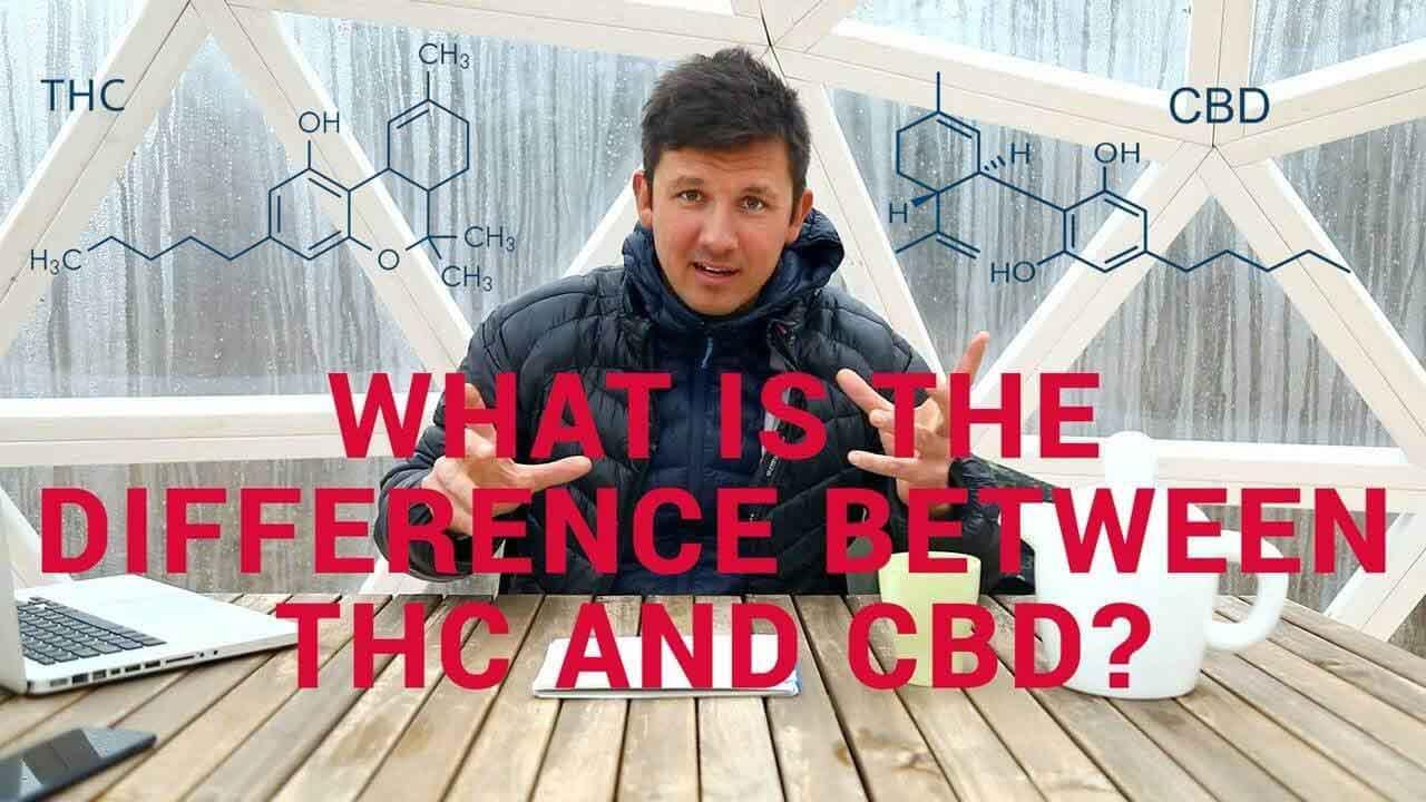 CBD vs THC - Video