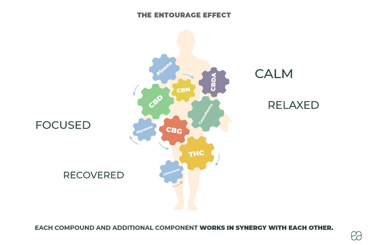 infographic explaining the entourage effect and how the compounds work in synergy with each other