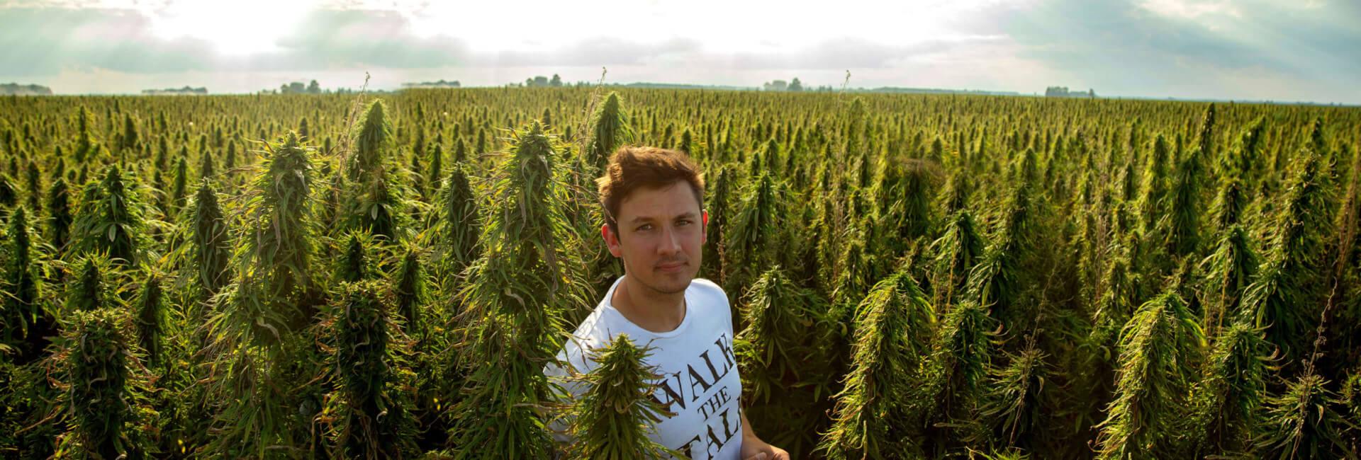 Henry Vincenty in hemp field wearing white t-shirt with words 'walk the talk'