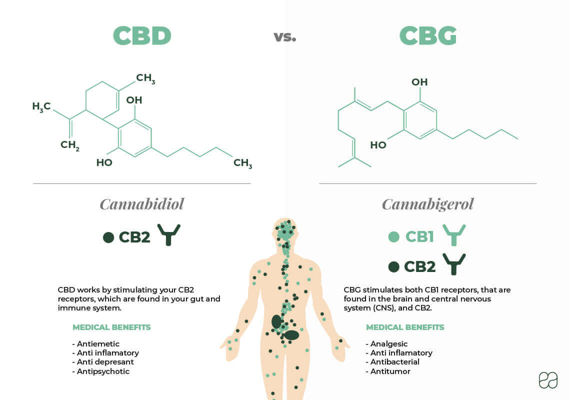 infographic explaining the difference between CBD and CBG