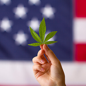 hemp leaf in front of flag with blue background and white stars