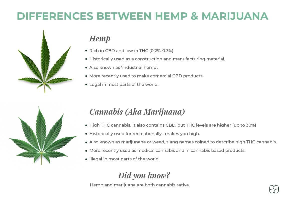 infographic explaining the differences between hemp and marijuana