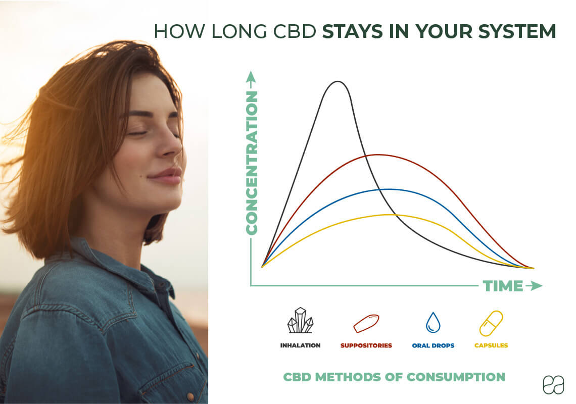 infographic explaining how long CBD stays in your system with a graph